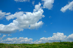 цветки облаков одичалые Стоковые Изображения