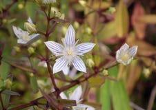 Цветки обочины Стоковые Изображения RF