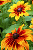 Цветки огня стоковые изображения rf