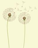 цветки одуванчика Стоковые Изображения