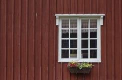 Цветки окна Стоковое Изображение RF
