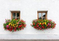 цветки 2 окна Стоковое фото RF