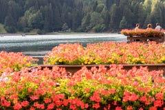 Цветки около доломитов стоковая фотография