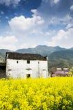 цветки дома солнечного дня Стоковое Изображение