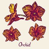 Цветки орхидеи установили, с надписью, пурпур, желтый цвет, апельсин Стоковая Фотография