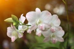 Цветки орхидеи в саде Стоковые Изображения