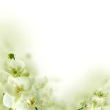 Цветки орхидеи и greenery, флористическая предпосылка Стоковые Фото