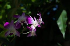 Цветки орхидеи на черной предпосылке Стоковые Фото