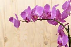 Цветки орхидеи Стоковая Фотография