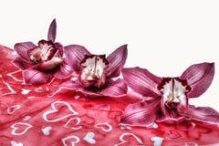 Цветки орхидеи Стоковое фото RF