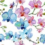 Цветки орхидей, иллюстрация акварели Стоковые Фотографии RF