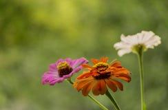 Цветки осени в саде стоковые изображения rf
