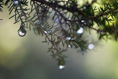 цветки осени Стоковое Изображение