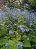 Цветки острова Стоковое фото RF