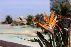 Цветки отмели в юговосточной Бразилии Стоковое Изображение