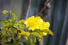 Цветки отмели в юговосточной Бразилии Стоковая Фотография RF
