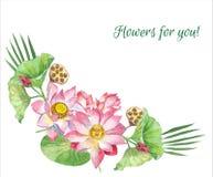 Цветки лотоса иллюстратор иллюстрации руки чертежа угля щетки нарисованный как взгляд делает пастель к традиционному Стоковое Фото