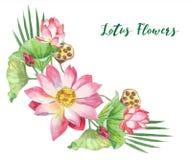 Цветки лотоса иллюстратор иллюстрации руки чертежа угля щетки нарисованный как взгляд делает пастель к традиционному Стоковая Фотография RF