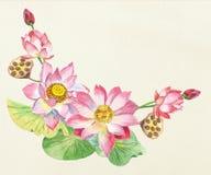 Цветки лотоса иллюстратор иллюстрации руки чертежа угля щетки нарисованный как взгляд делает пастель к традиционному Стоковая Фотография
