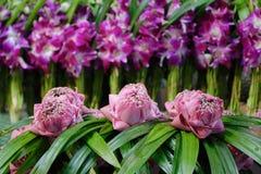 Цветки лотоса Стоковая Фотография RF
