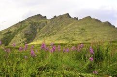 Цветки долины Стоковое Фото