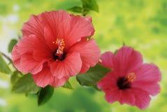 Цветки одичалого подняли в вазу Стоковое фото RF