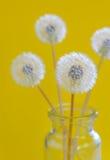 Цветки одуванчика в стекле Стоковые Фото