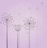 Цветки одуванчика Стоковое Изображение RF