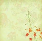 Цветки павлина на дереве Стоковая Фотография