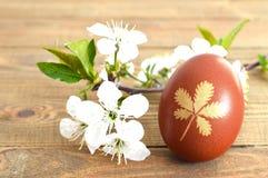 Цветки пасхального яйца и весны на деревянной предпосылке Стоковое Изображение RF