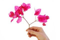 цветки перстов Стоковая Фотография RF