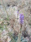 Цветки песка Стоковые Изображения RF