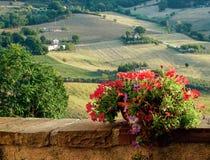Цветки петуньи в патио Стоковые Изображения