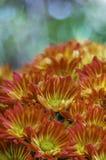 Цветки пинка, оранжевых и желтых стоковое фото rf