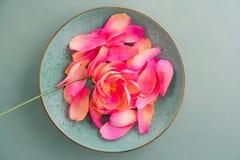 Цветки пиона бумаги Crepe Стоковое фото RF