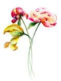 Цветки пиона и тюльпанов Стоковая Фотография