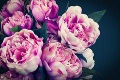 Цветки пиона Стоковые Изображения