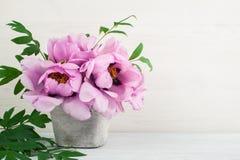 Цветки пионов на белой предпосылке Стоковая Фотография RF