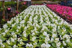 Цветки питомника Стоковые Фото