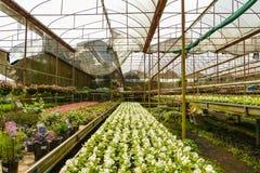 Цветки питомника Стоковое Изображение