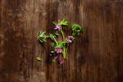 Цветки плоско кладут стоковое фото rf