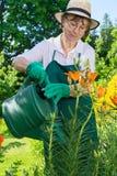 Цветки пожилой женщины моча в саде Стоковые Изображения