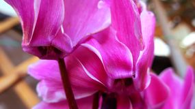 Цветки полных цветов весен красивые стоковая фотография