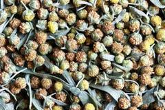Цветки полыни Стоковая Фотография