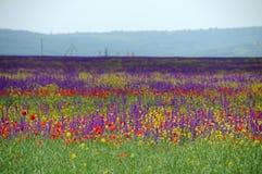 цветки поля Стоковое фото RF