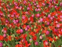 цветки поля Стоковые Изображения RF