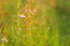 Цветки под заходом солнца Стоковое Изображение RF