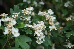Цветки подшипника с цельной втулкой Стоковые Фото