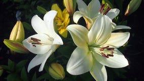 Цветки поля и сада Стоковая Фотография