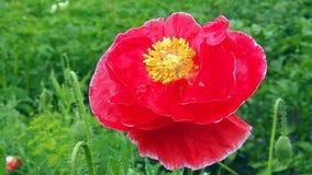 Цветки поля и сада Стоковые Фотографии RF